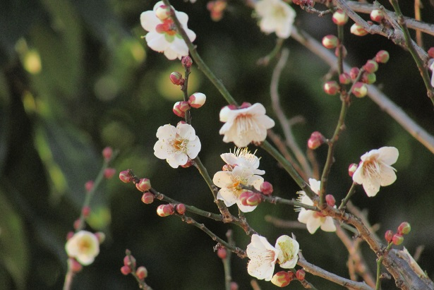 koshigaya160104-110.jpg