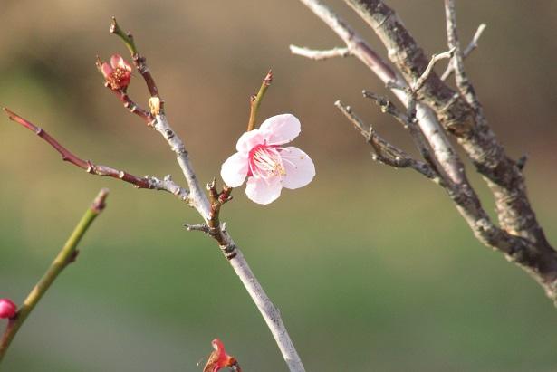 oomiyadaini160221-139.jpg