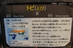 oosaki160110-114.jpg