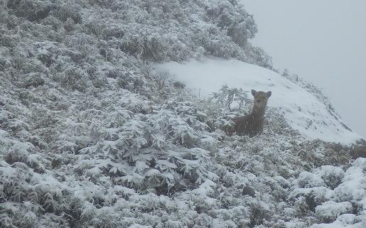 吹雪の山頂付近
