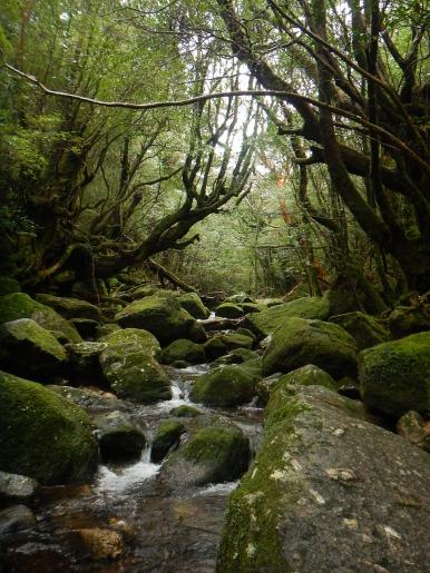 雨の白谷雲水峡