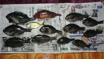 2016 初釣り 釣果