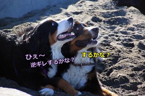 s-IMG_0906_20160212134932c28.jpg