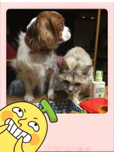 ルビーと小太郎