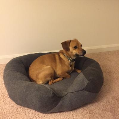 mocha dog bed