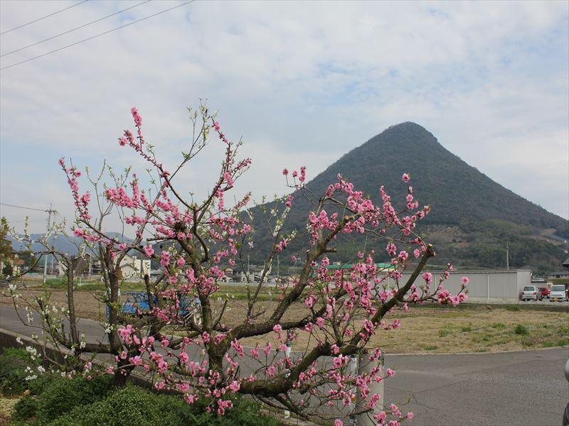 sakuraと飯野山