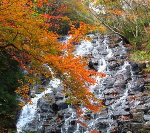 スマホ用 2153秋の布滝 960×854.jpg