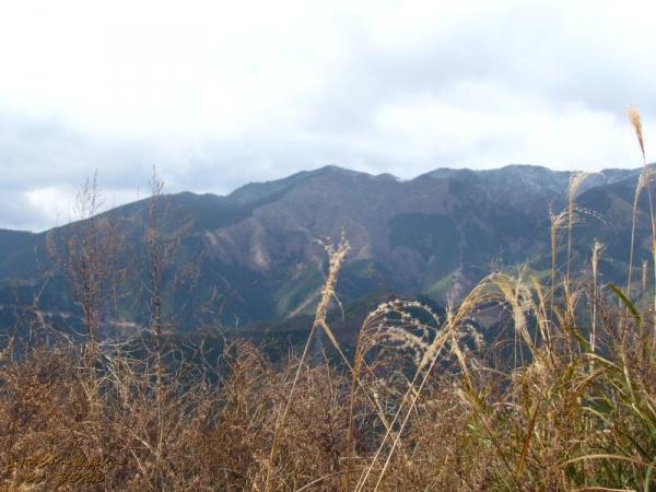 2650冬枯れの山151219.jpg