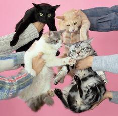 きのこ帝国 - 猫とアレルギー
