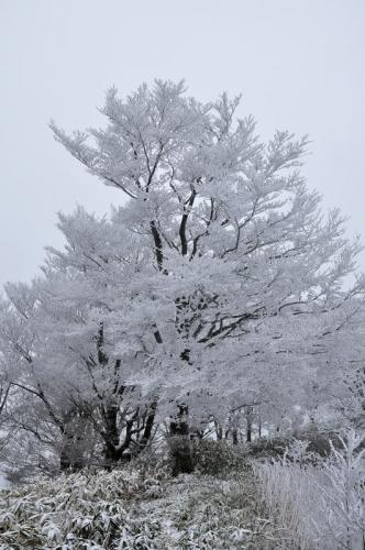 9中津明神山16.01.08