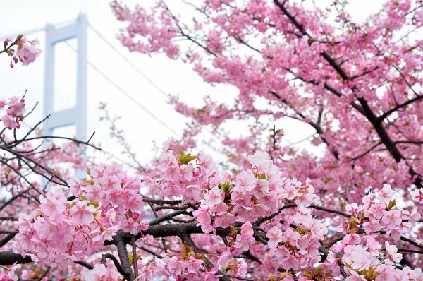 4糸山16.03.04