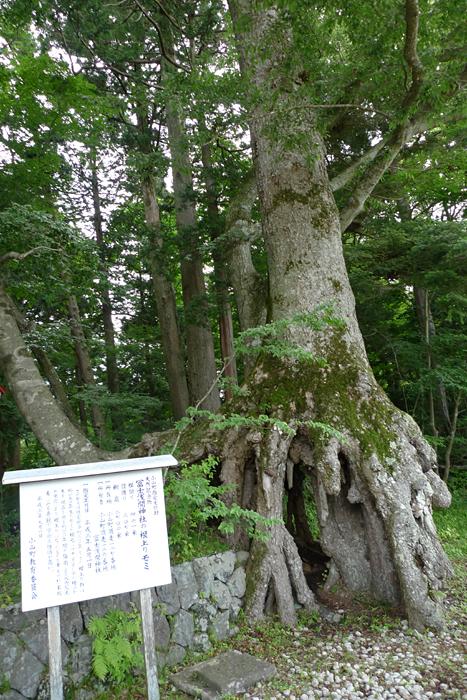 駿河の神社  富士浅間神社  3