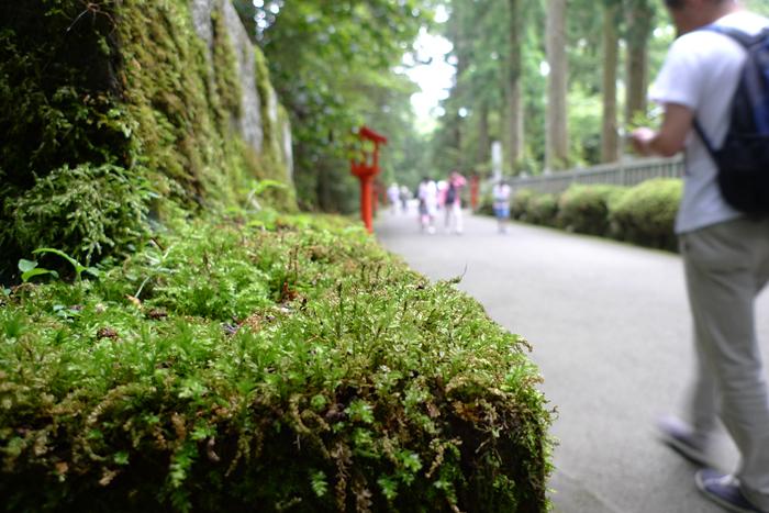 相模の神社  箱根神社  5