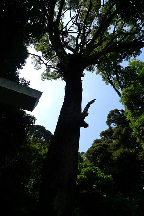 相模の神社  伊豆山神社  10