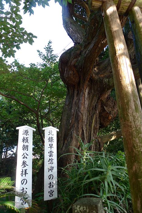 伊豆の神社  白濱神社  1