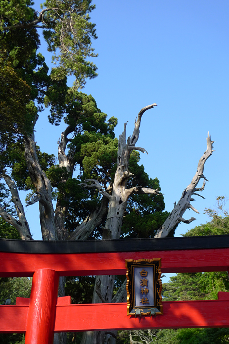伊豆の神社  白濱神社  5