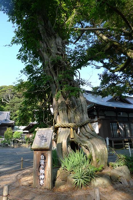 伊豆の神社  白濱神社  9