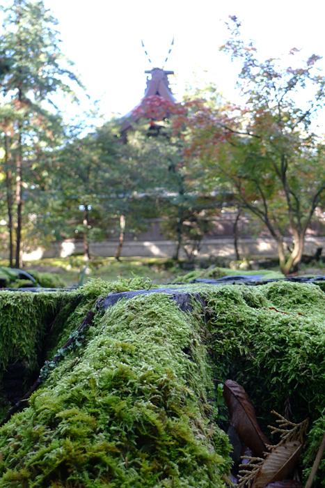 但馬の神社  出石神社  20