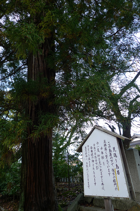 若狭の神社  若狭姫神社  4