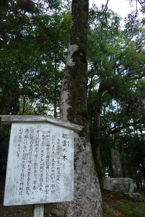 若狭の神社  若狭姫神社  15