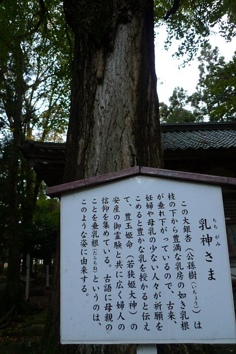 若狭の神社  若狭姫神社  19