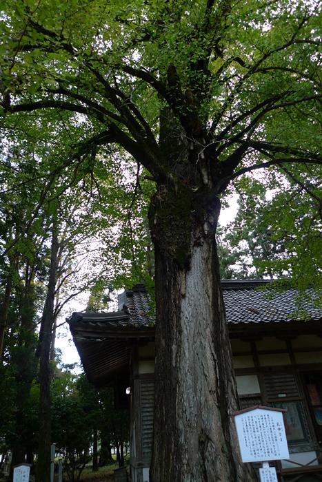 若狭の神社  若狭姫神社  20