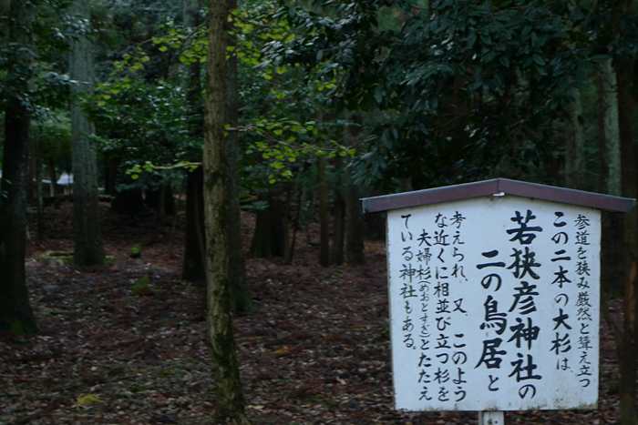 若狭の神社  若狭彦神社  7