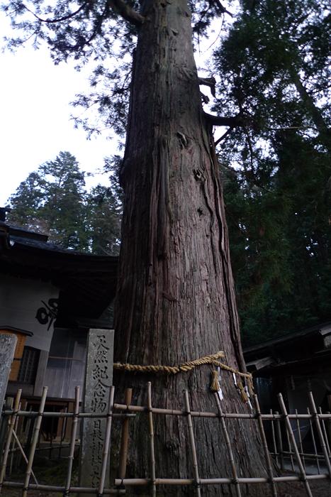 新春  2016  日枝神社 2