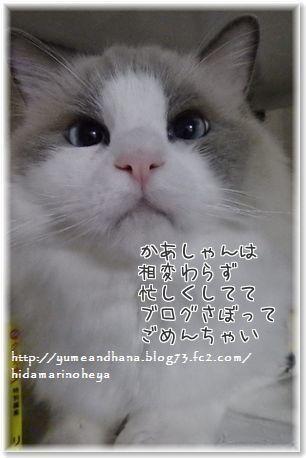 001-ベルたんEmtaGMr7h0CnGA_1448974517_1448974748
