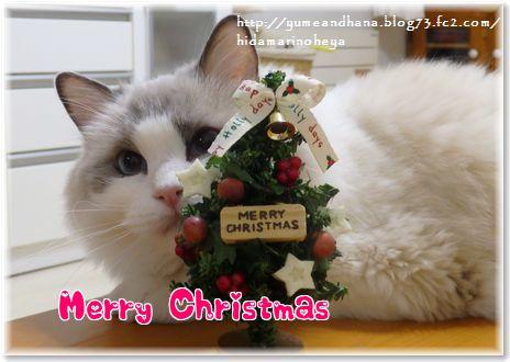 001-クリスマスZ4wrZpKYlQnJ4MW1450963676_1450963836