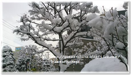 001-雪1512262359