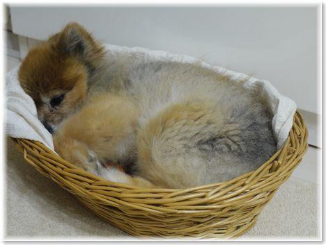 001-籠犬160206-2259