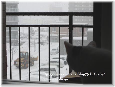 001-雪とココ16002080210