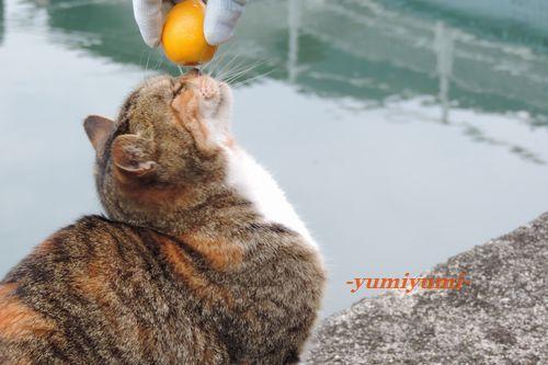 猫と金柑1