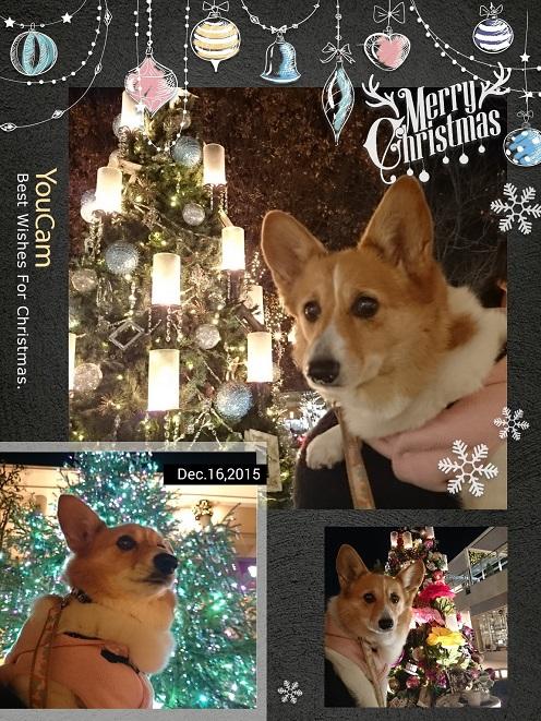2015-12-16-20-12-11-010.jpg
