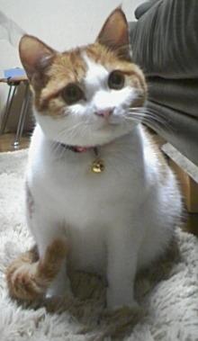 ブログNo.484(モヒカン猫&くぅにゃんの1月)5