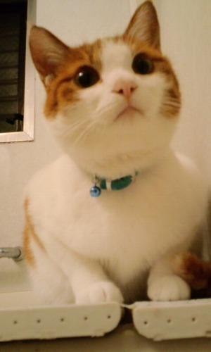 ブログNo.484(モヒカン猫&くぅにゃんの1月)6