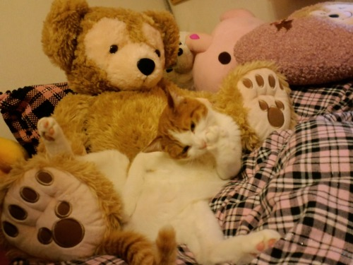 ブログNo.522(お蔵入り猫画像発掘!第六弾&(^・ェ・)ジー…)2