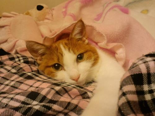 ブログNo.522(お蔵入り猫画像発掘!第六弾&(^・ェ・)ジー…)3