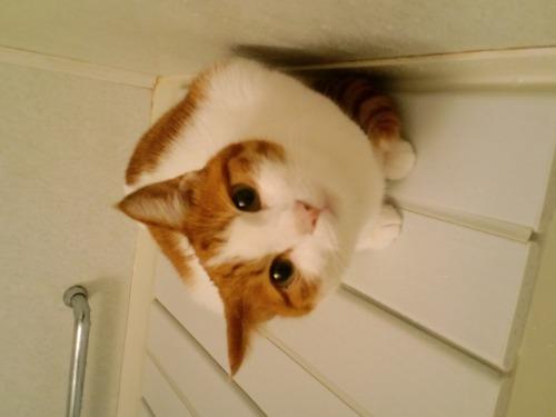 ブログNo.522(お蔵入り猫画像発掘!第六弾&(^・ェ・)ジー…)4