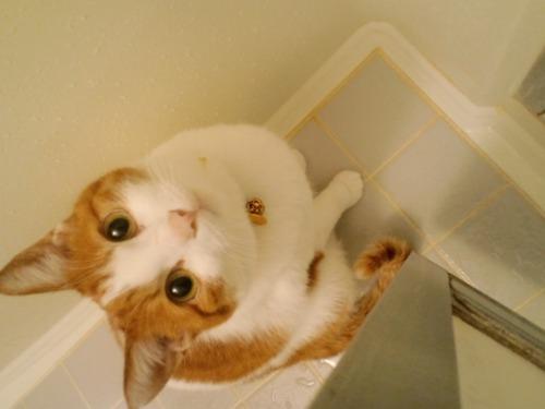 ブログNo.522(お蔵入り猫画像発掘!第六弾&(^・ェ・)ジー…)6