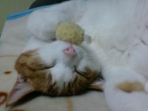 ブログNo.522(お蔵入り猫画像発掘!第六弾&(^・ェ・)ジー…)8