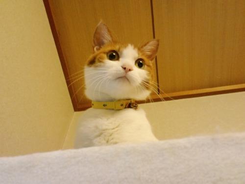 ブログNo.523(お蔵入り猫画像発掘!第七弾)2