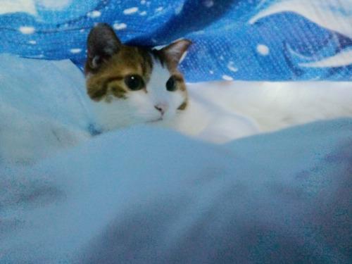 ブログNo.523(お蔵入り猫画像発掘!第七弾)3