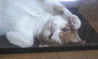 ブログNo.526(お蔵入り猫画像発掘!第八弾(°_°;)ハラハラ)4