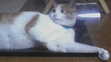 ブログNo.526(お蔵入り猫画像発掘!第八弾(°_°;)ハラハラ)2