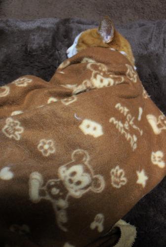ブログNo.482(変わりゆく猫の寝相)1