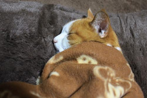 ブログNo.482(変わりゆく猫の寝相)2