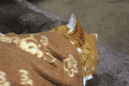 ブログNo.482(変わりゆく猫の寝相)3
