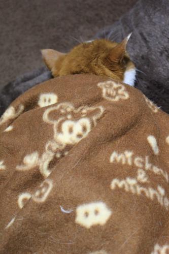 ブログNo.482(変わりゆく猫の寝相)4